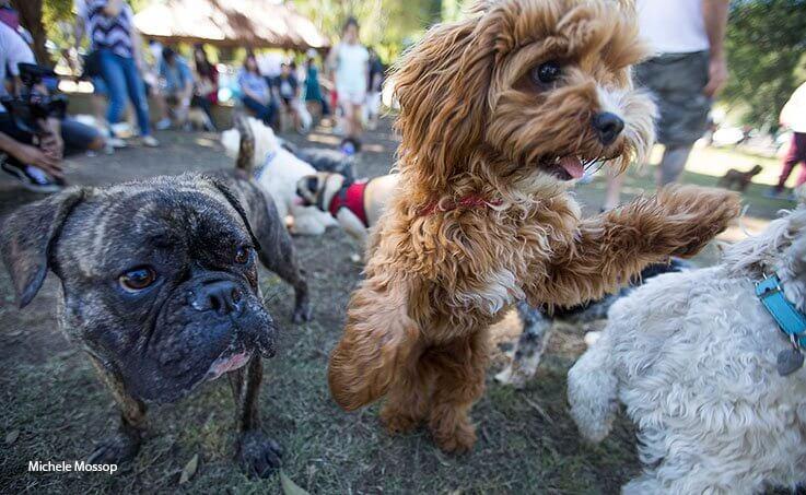 mad paws dog fair